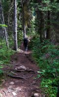 Small quick trail that leads to the banks of the Yoho River.