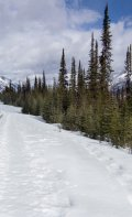 Pleasent snowshoe trail