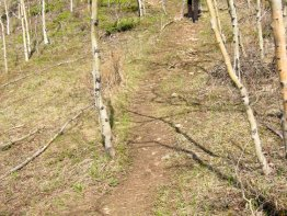 Single track trail.