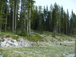 What the entrance into the forest for Mount Lawrence Grassi looks like.