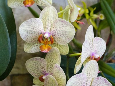 attractions/calgary-orchid-show/orchid-show-30.jpg