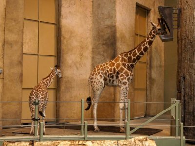 attractions/calgary-zoo/calgary-zoo-13.jpg