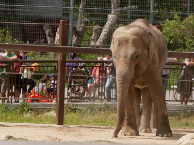 attractions/calgary-zoo/calgary-zoo-18.jpg