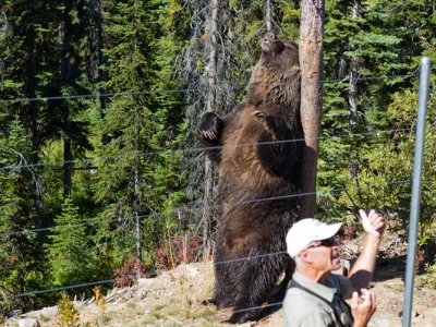 attractions/grizzly-bear-refuge-kicking-horse-resort/golden-adventure-90.jpg