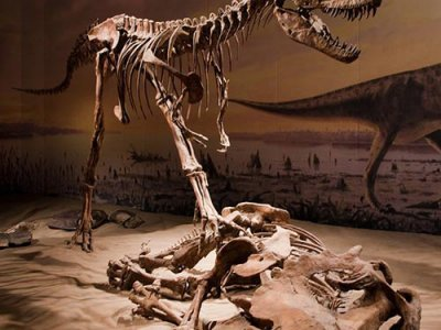 attractions/royal-tyrrell-museum/royal-tyrrell-museum-15.jpg