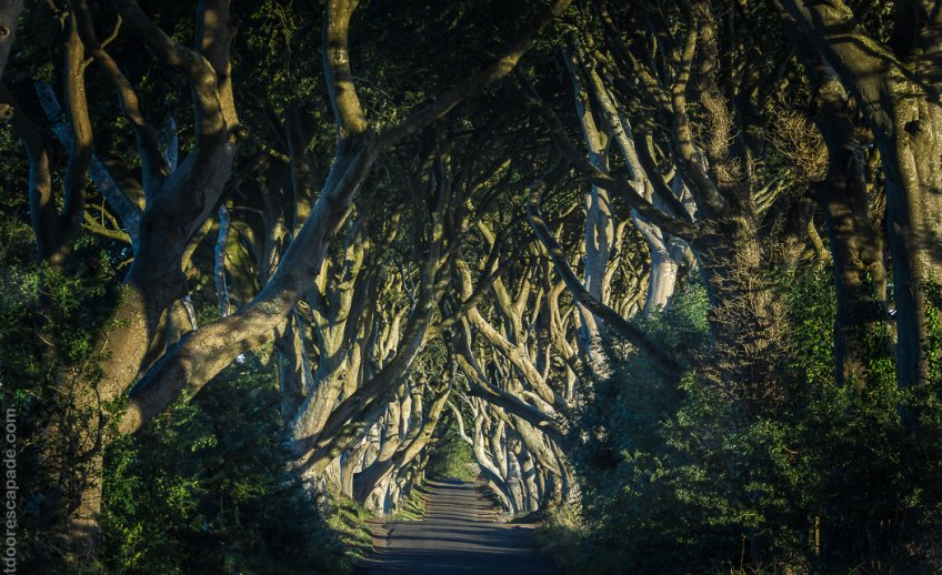 The Dark Hedges from the Game of Throns